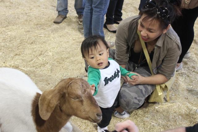 The Urban Ma and Daniel in the Animal Nursery