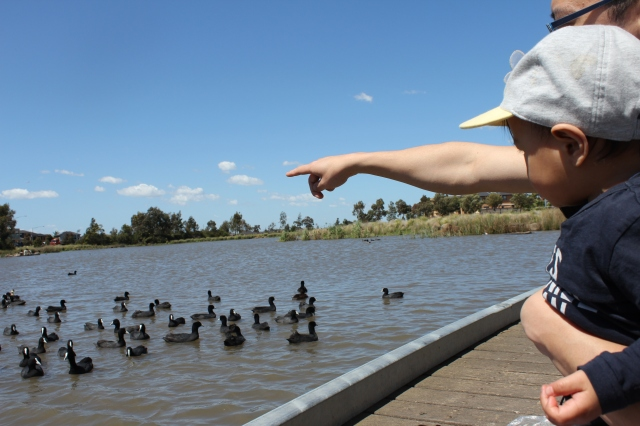 The Urban Ma blog jacqfruit Brimbank Cairnlea lakes