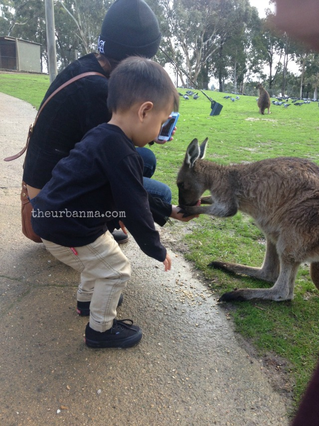 Daniel and the kangaroo