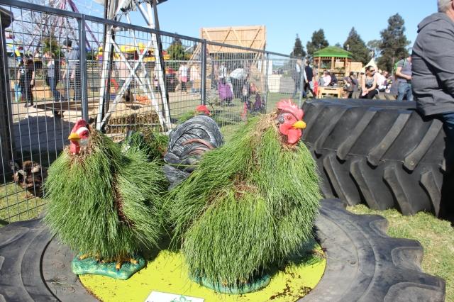Grassy Hens Royal Melbourne Show