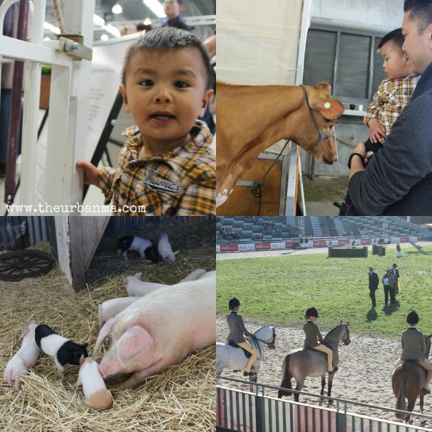 Show animals 2014