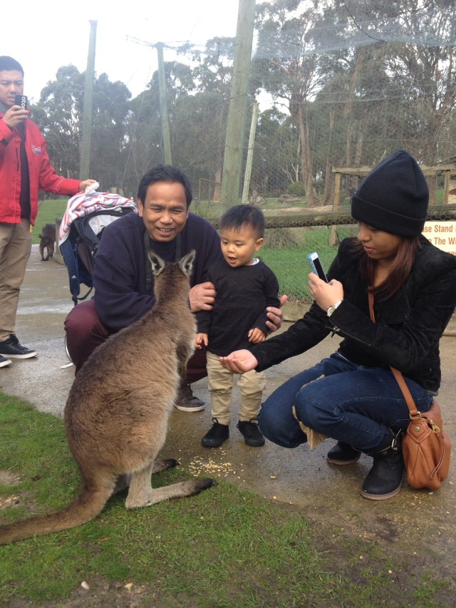 Lolo time Ballarat Wildlife Park The Urban Ma