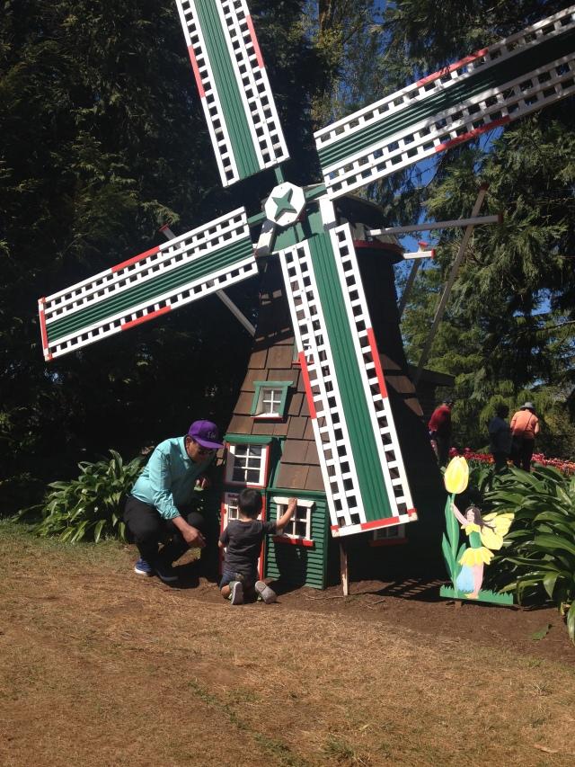 Windmill Tulip Festival