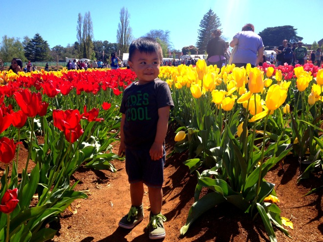 Travel Thursdays - 7 Things We Love about the Tesselaar Tulip Festival